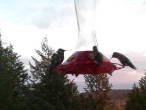 We are surrounded by hummingbirds